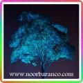 نورپردازی فضای سبز - درخت بلند