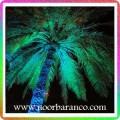 نورپردازی فضای سبز درخت نخل
