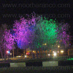 نورپردازی درختان